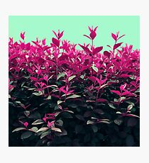 Pink Spring Photographic Print