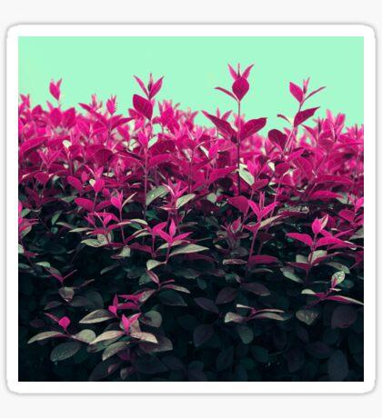 Pink Spring Sticker