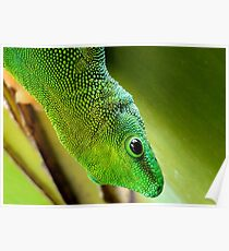 Indoor Menagerie - Gecko - Dunedin Butterfly Sanctuary Poster