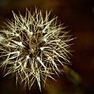 Dandelion Sparkler by Barbara  Brown