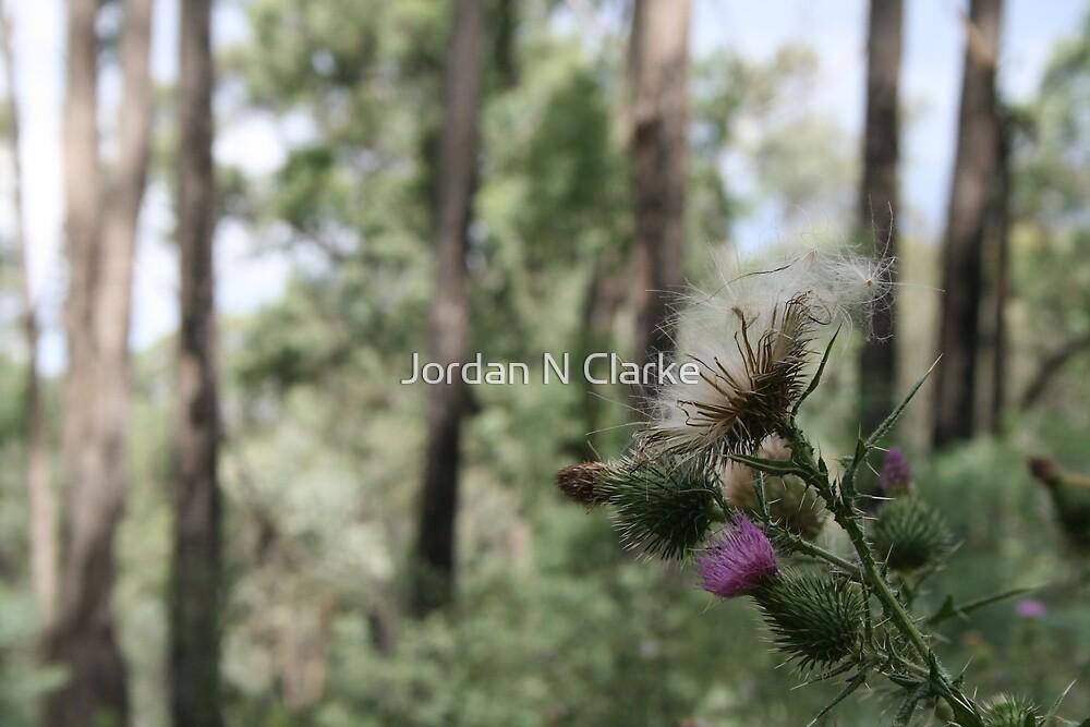 Thistle Seeds by Jordan N Clarke
