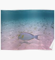 Tropical Paradise Maldives Coral Fish Turquoise Ocean Poster