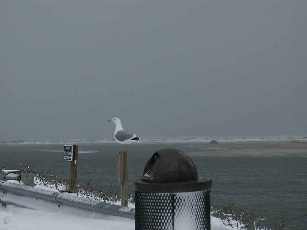 winter day by Stephen Senter