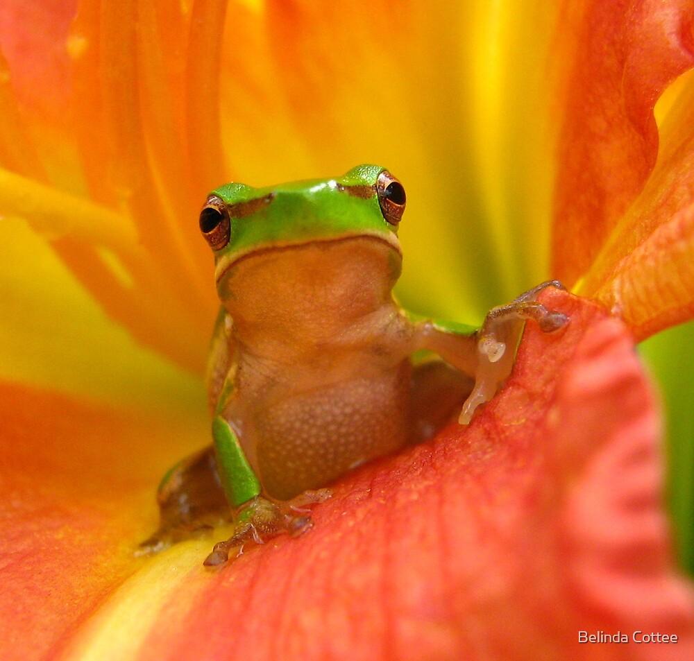 little fatty by Belinda Cottee