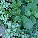 Green Leaves - Photo by REKHA by REKHA Iyern [Fe] Records Canada