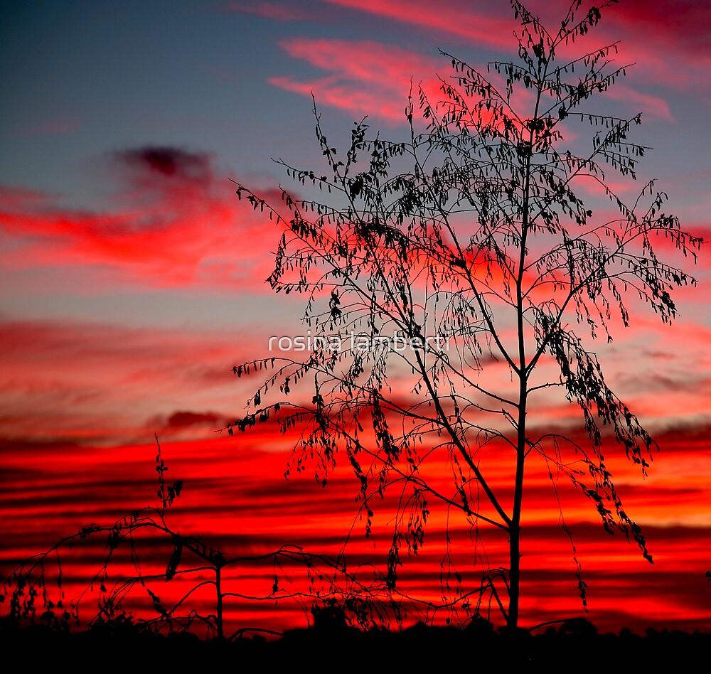 Templestowe Sunset by Rosina  Lamberti