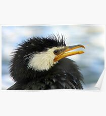 Does It Make Any Difference! - Shag/Cormorant - Queenstown NZ Poster