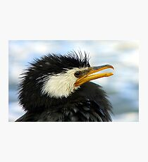 Does It Make Any Difference! - Shag/Cormorant - Queenstown NZ Photographic Print