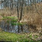 Spring Pond by Imagery
