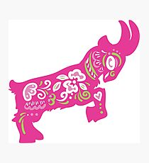 Pretty in Pink Pygmy Goat Photographic Print