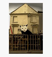 Rat Trap Photographic Print