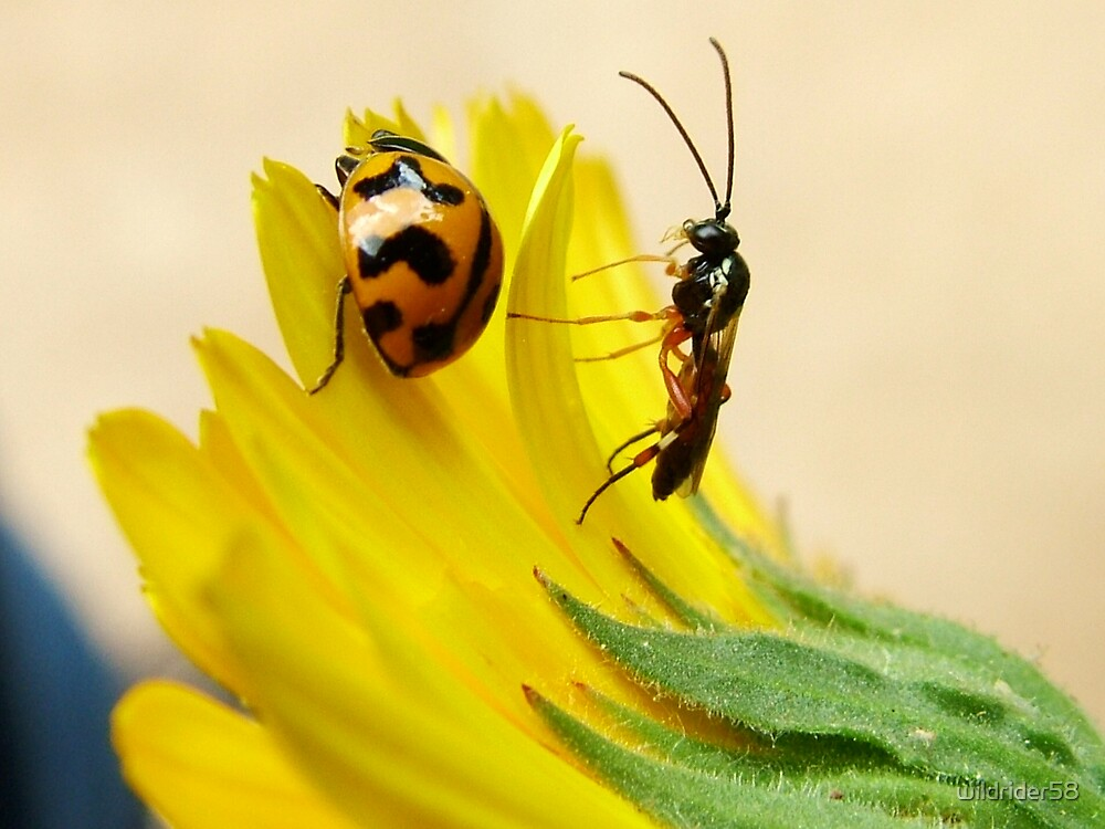 bugs by wildrider58
