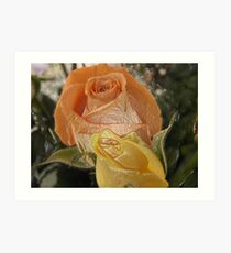 Roses Wrapped in Plastic Art Print