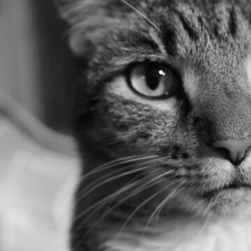 Cat by ATPhoto
