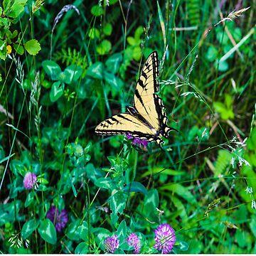 A Butterfly Using Its Wings by KirstenJRenfroe