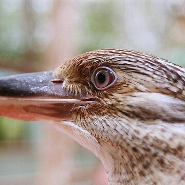 Kookaburra by jade77green