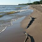 Driftwood on Winnipeg Beach by Stephen Thomas