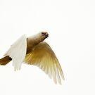 Mid-Air Suspension by Wildpix