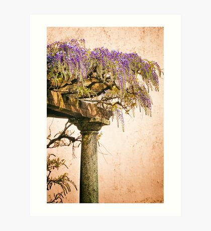 Porch with Wisteria Art Print