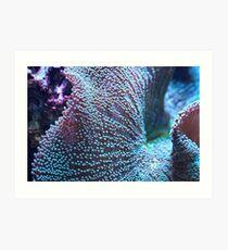 Haddon Teppich Seeanemone, blau / grün Kunstdruck