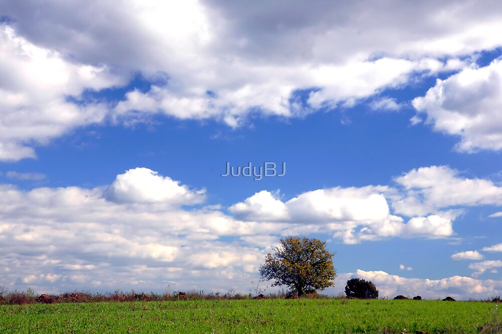 Solitary tree by JudyBJ