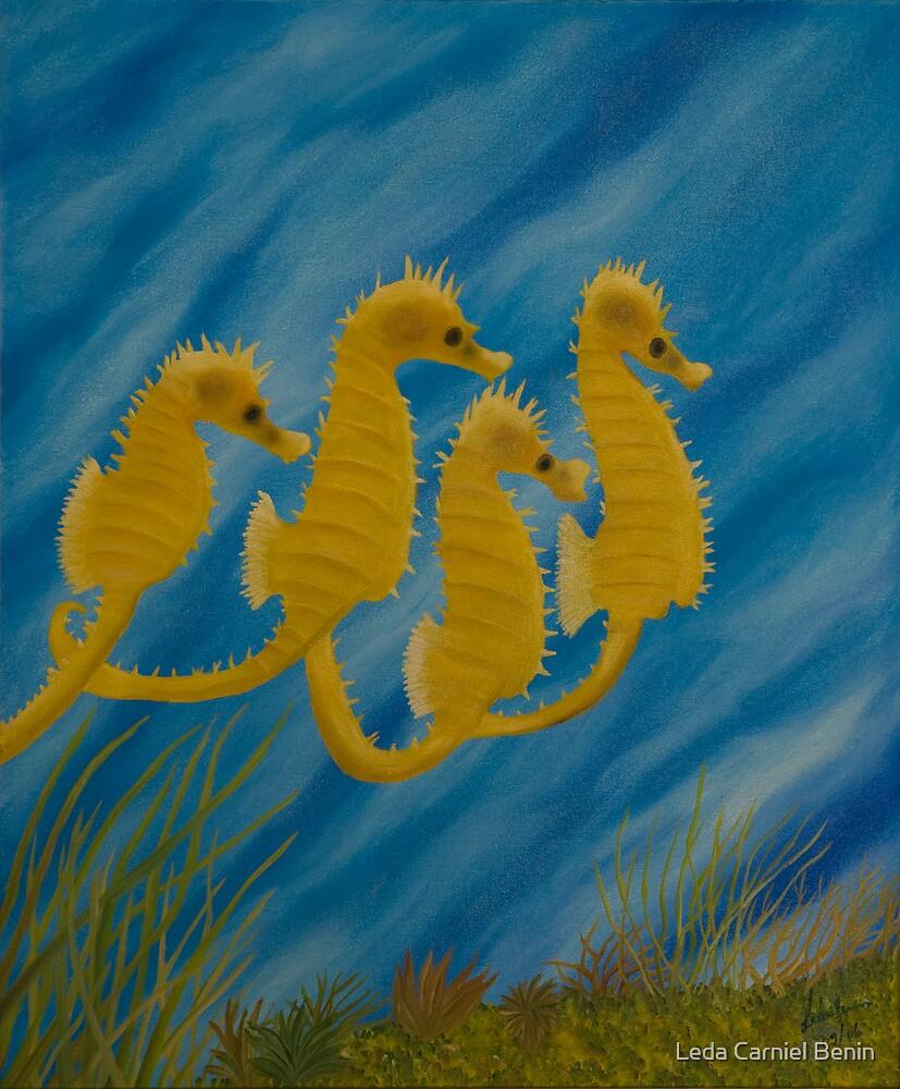 cavalos-marinhos by Leda Carniel Benin