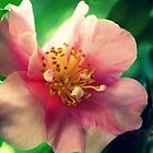 Camellia In Pink by Evita