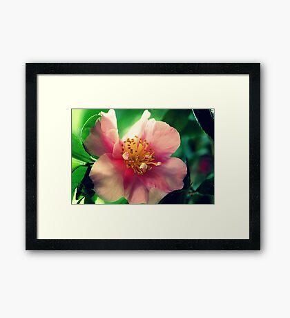 Camellia In Pink Framed Print