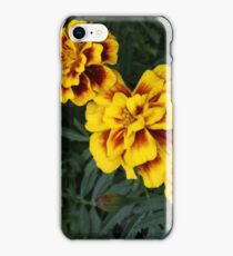 Bursting Marigolds iPhone Case/Skin