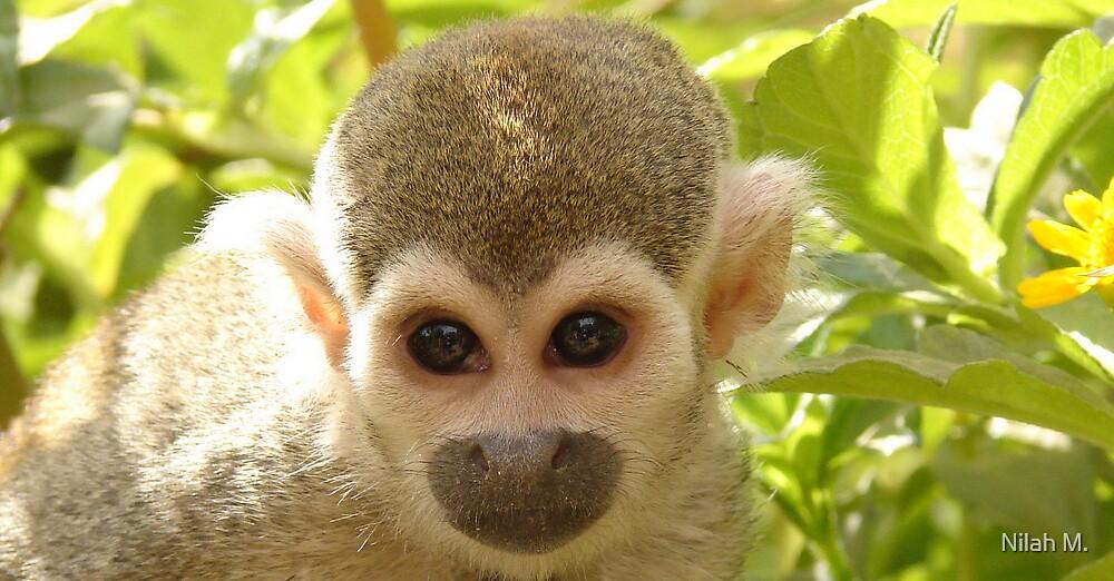 Plotting Monkey by Nilah M.