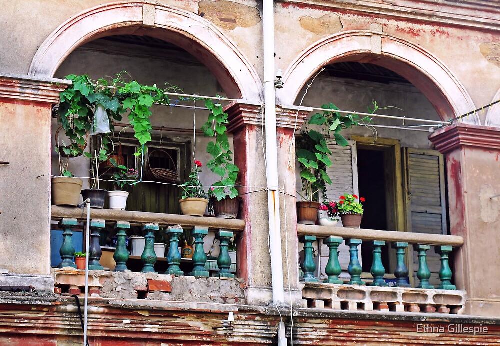 Balcony Garden by Ethna Gillespie