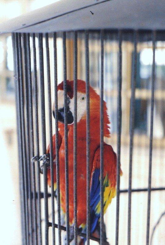 Bird by ricki d