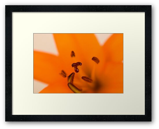Orange Lilly Flower by Rob  Ford