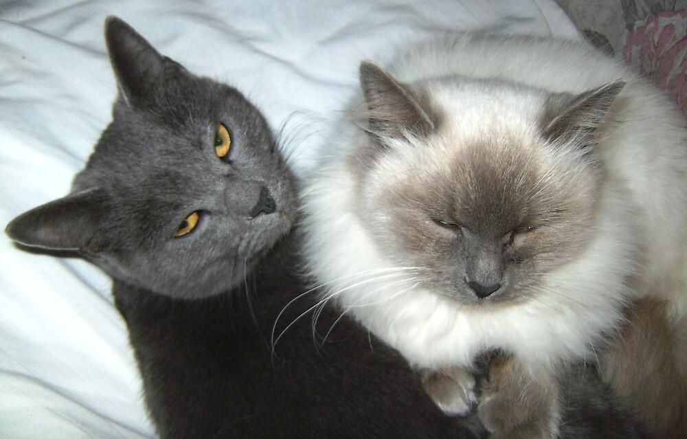cats by ricki d