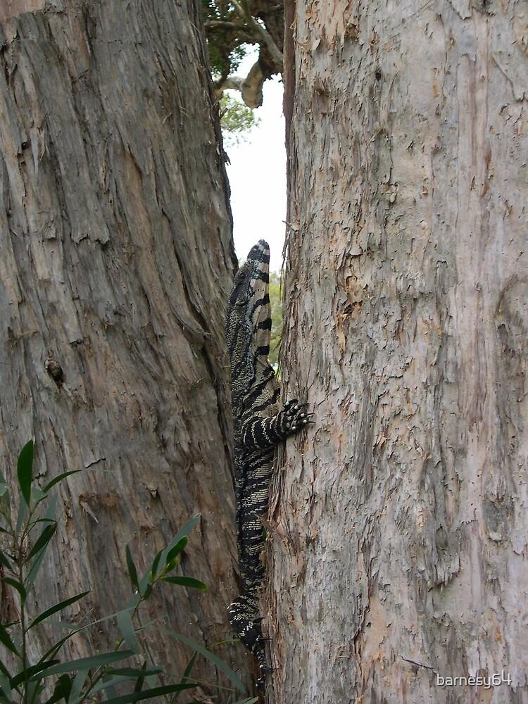 goanna up tree by barnesy64