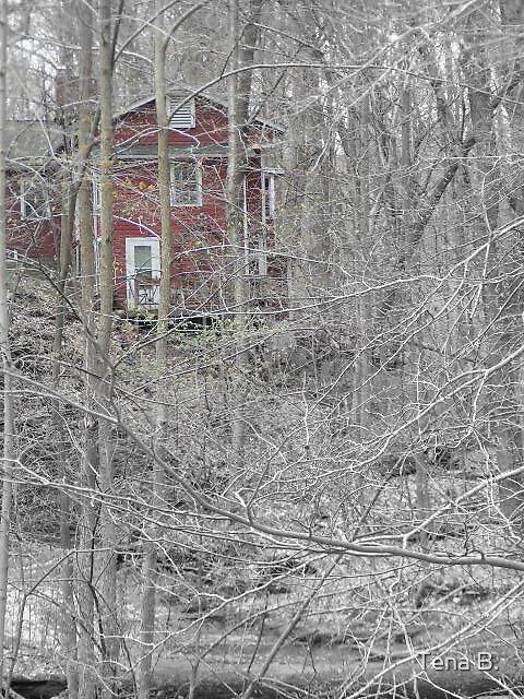 Inn the woods. by Tena B.