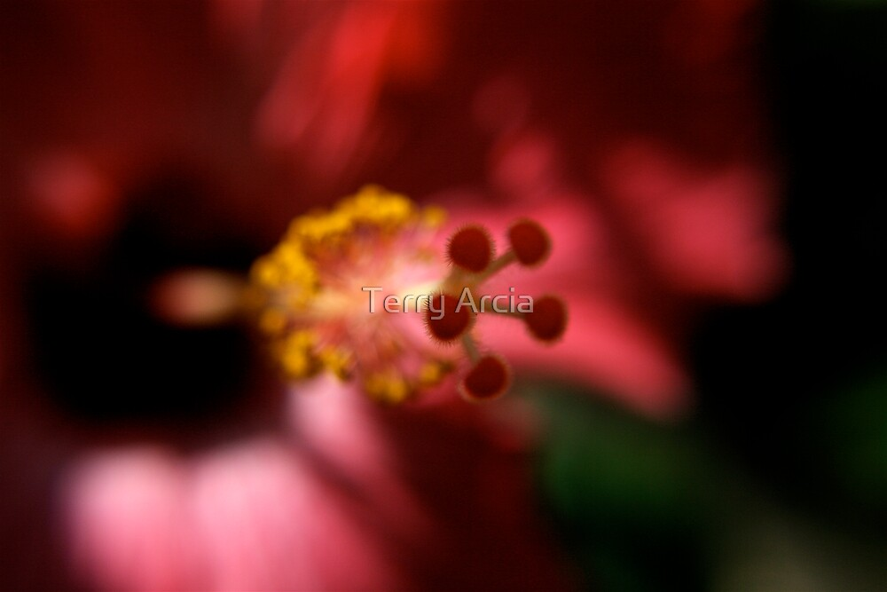 Floral Abstract by Terry Arcia