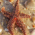 Starfish by Zina Stromberg