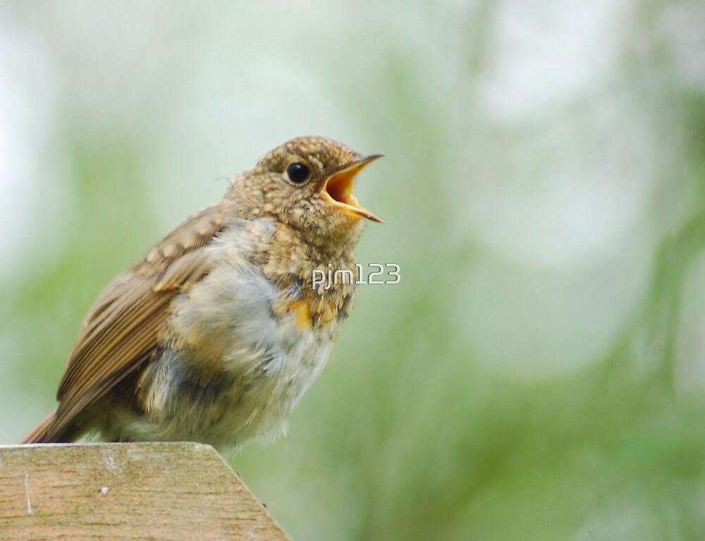 rocking robin by pjm123