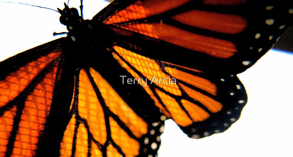 Broken Wing by Terry Arcia