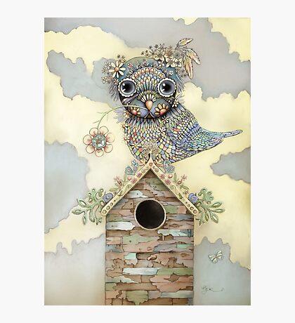Blue Owl Birdhouse I Photographic Print