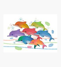 A Rainbow of Dolphins Photographic Print