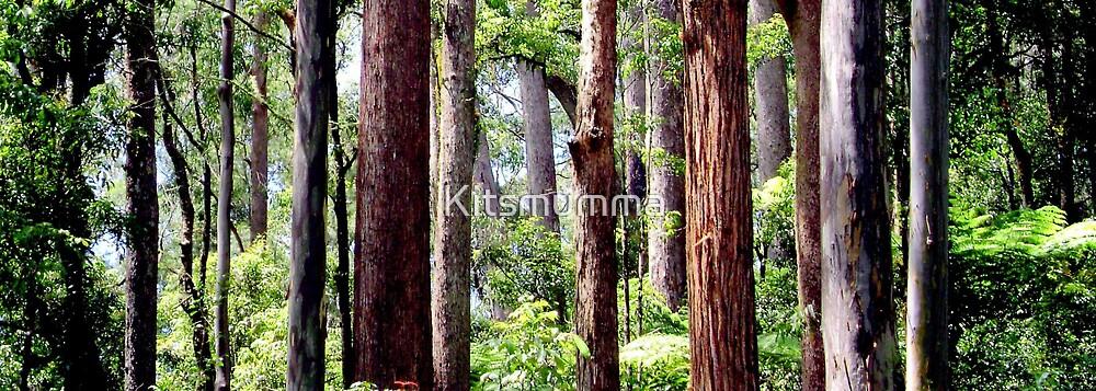 Coastal Rainforest by Kitsmumma