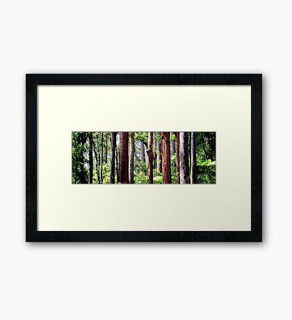 Coastal Rainforest Framed Print