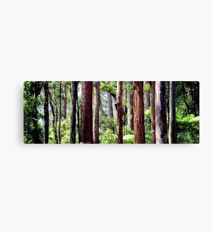 Coastal Rainforest Canvas Print