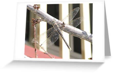 Dragonfly by Denise Martin