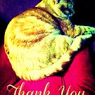 Thank You Ginger Kitten by EvePenman