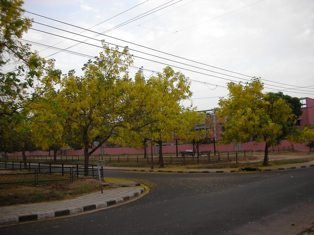 the right angle streets lined with yellow amaltas trees by anurag singla