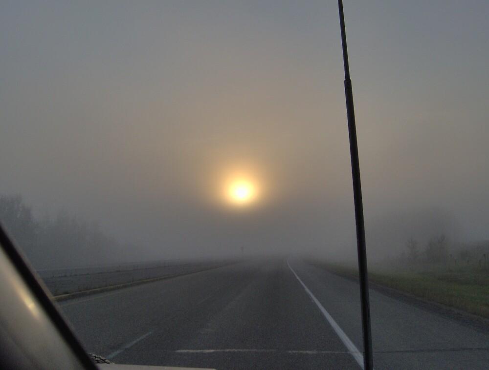 Morning Fog by cameragirl