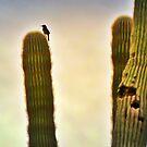IN THE BEGINNING. by HanselASolera